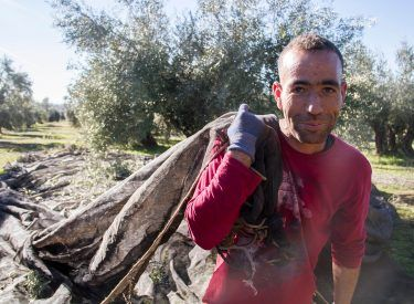 Effort and passion in every EVOO bottle