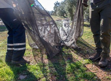 Nets used in the olives collection